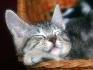爱猫一族必学:三个猫咪养护方法