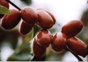 男人常吃红枣 壮阳补肾效果好