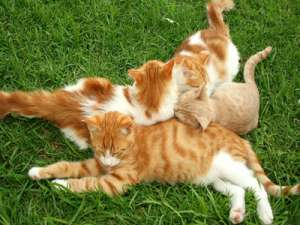 女人长期和宠物相处容易有宠物病
