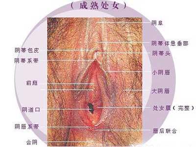 史上最震撼的女性生殖器真实图片2