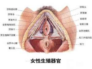 最震撼的女性生殖器外阴真实图片
