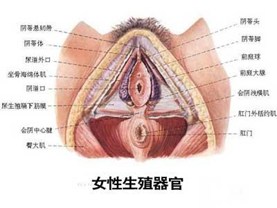 史上最震撼的女性生殖器真实图片1