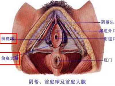 史上最震撼的女性生殖器真实图片7