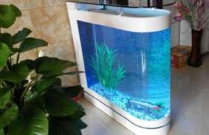 家里养鱼讲究风水吗?