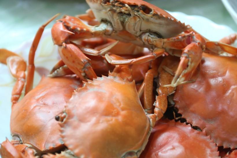 螃蟹的功效与作用有哪些?